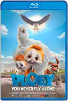 Ploey: Cabeza de chorlito (2017) HD 720p Latino