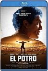 El Potro Lo mejor del amor (2018) HD 1080p Latino