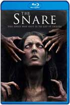 The Snare (2017) HD 720p Latino