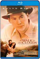 A Walk in the Clouds (1995) HD 720p Subtitulados