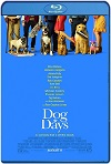 Dog Days (2018) HD 720p Latino Y Subtitulada