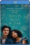El sol también es una estrella (2019) HD 720p Latino y Subtitulada