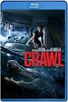 Crawl (Infierno en la tormenta) (2019) HD 720p Latino