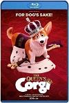 Corgi: un perro real (2019) HD 720p Latino