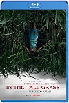 En la hierba alta (In the Tall Grass) (2019) HD 720p Latino
