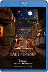 La Dama y el Vagabundo (2019) HD 720p Latino