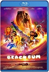 The Beach Bum (2019) HD 1080p Latino