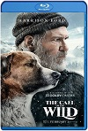 The Call of the Wild (2020) HD 1080p Latino