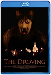 The Droving (2020) HD 1080p