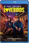 The Lovebirds (2020) HD 720p Latino