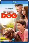 Think Like a Dog (2020) HD 1080p