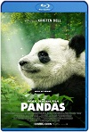 Pandas (2018) Documental HD 1080p Latino