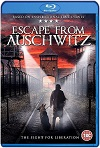 The Escape from Auschwitz (2020) HD 1080p Latino