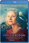 Un Milagro Inesperado / Penguin Bloom (2020) HD 720p latino