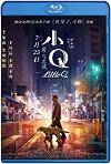 Xiao Q / Pequeña Q (2019) HD 1080p Latino