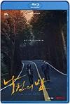 Noche en el Paraíso (2020) HD 720p Latino