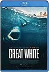 Great White / Tiburón blanco (2021) HD 720p Latino