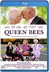 Queen Bees (2021) HD 720p