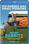 Peter Rabbit 2: Conejo en fuga (2021) HD 1080p Latino