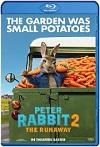 Peter Rabbit 2: Conejo en fuga (2021) HD 720p Latino